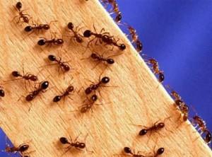 муравьи ползают по доске