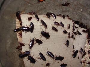 борьба с тараканами в доме