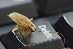 таракан на клавиатуре