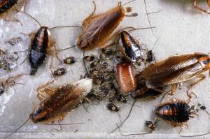 разные виды тараканов