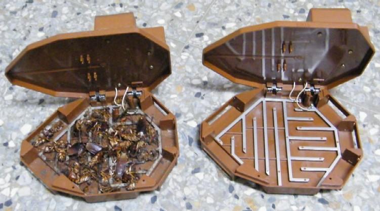 Ловушки для тараканов своими руками фото