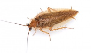 мерзкий таракан в доме
