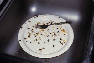 тараканы в грязной тарелке