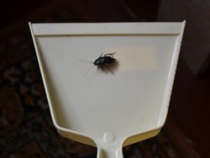 таракан в совке