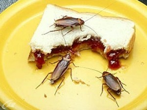 тараканы на тарелке едят хлеб