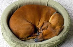 место где спит собака