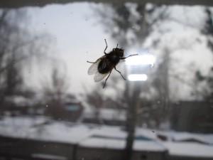 муха на стекле