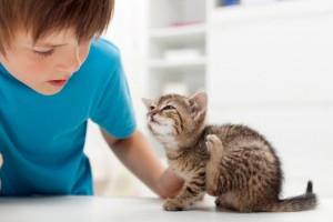 блохи у маленького котенка