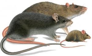 Какой отпугиватель от мышей лучше ультразвуковые отпугиватели для собак саратов