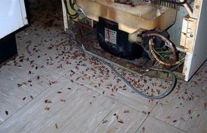 тараканы прячутся за плитой