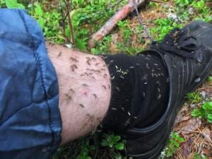 комары на ноге