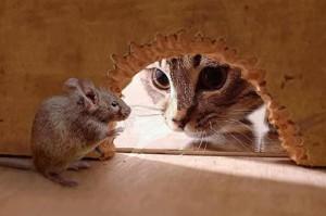 кот смотрит на мышь