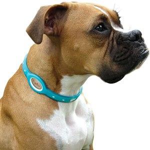 антиблошиный ошейник для собак