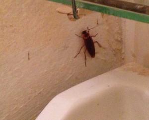 таракан в ванне